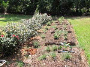 herbgarden 2